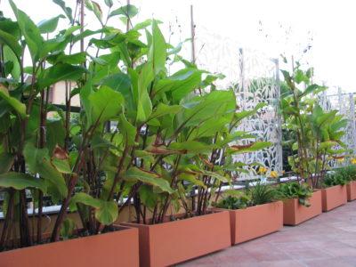 Tropique Mauresque